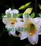 北京德兴缘家政服务公司