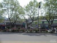天申茗茶(南山路店)