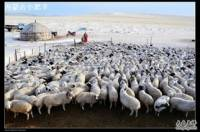 小肥羊(张掖路店)