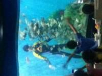 加斯加海底餐厅
