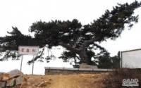 劲松园风景区