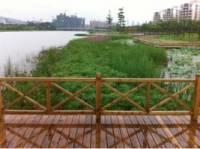 蕉门河绿道