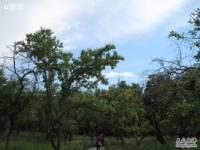 天山野生动物园