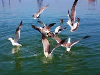 金石滩亲海游—喂海鸥钓鱼
