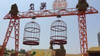 鸟巢萌萌哒乐园